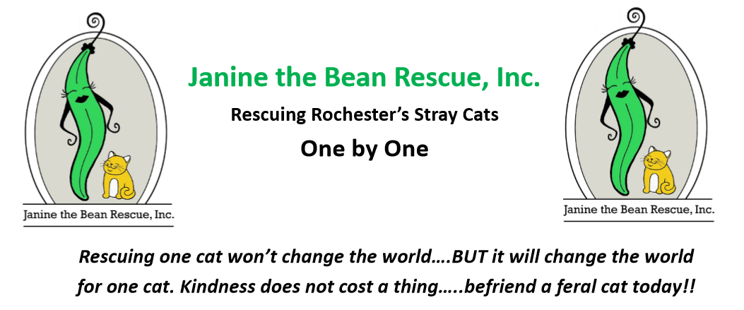 Janine The Bean Rescue